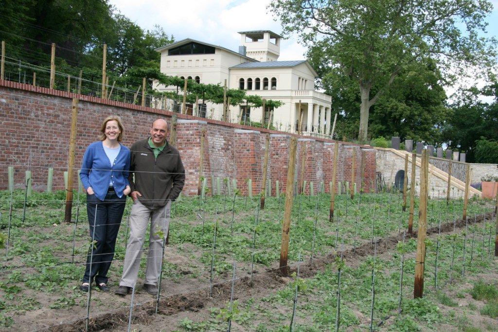 Neuer Weinberg der Villa Jacobs in Potsdam - Gourmetwelten - Das Genussportal
