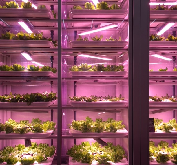 Vertical Farming in the City: Good Bank in Berlin Foto: Rechenberg