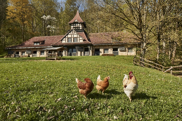 Schlosshotel Hohenhaus | Farm to Table